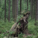 Ghost Harz Woods